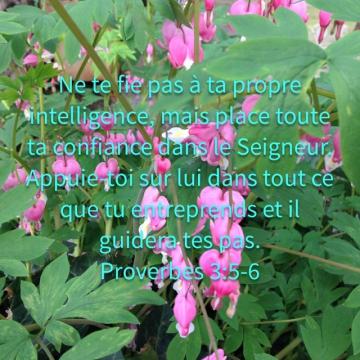 http://lesyeuxdanslescieux.hautetfort.com/media/00/01/524287376.JPG