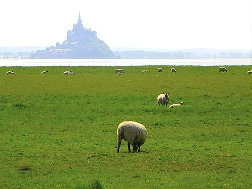mouton pour rosa.jpg