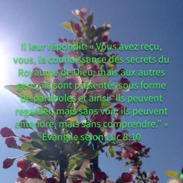 http://lesyeuxdanslescieux.hautetfort.com/media/02/02/1848566452.JPG